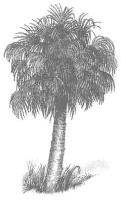 palm tree coloring pages palm sabal palmetto yo - Palm Tree Coloring Pages Print