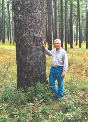 Leon Neel stands by a centuries-old longleaf pine on Greenwood Plantation. Where he's been a consulting forester and wildlife manager for over 50 years. Photo by Richard T. Bryant. Email richard_t_bryant@mindspring.com